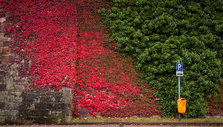 Осень умеет уходить красиво. 55 причин полюбить осень — фото 51