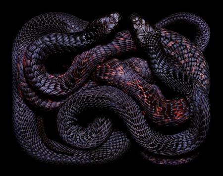 Гвидо Мокафико (Guido Mocafico) - Повелитель змей — фото 1