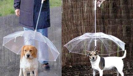 Зонт для собак!