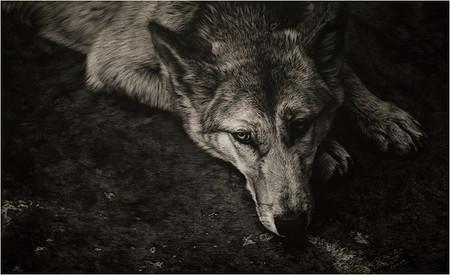 Картины в технике скрэтчборд от Кристины Пенеску — фото 19