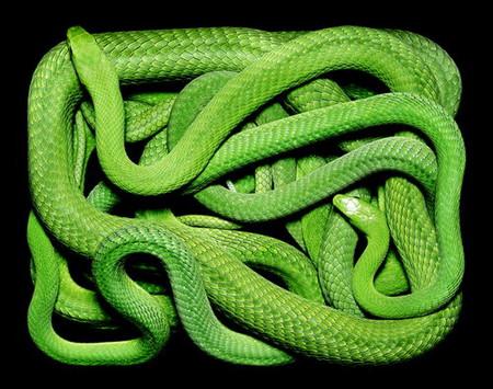 Гвидо Мокафико (Guido Mocafico) - Повелитель змей — фото 3