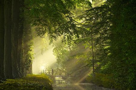 Осень – многоцветная царица… Волшебные фотопейзажи Ларса Ван де Гур — фото 35