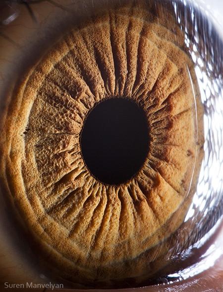 Глаза людей и животных – макроснимки Сурена Манвеляна — фото 21