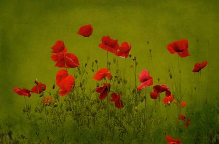 Осень – многоцветная царица… Волшебные фотопейзажи Ларса Ван де Гур — фото 33