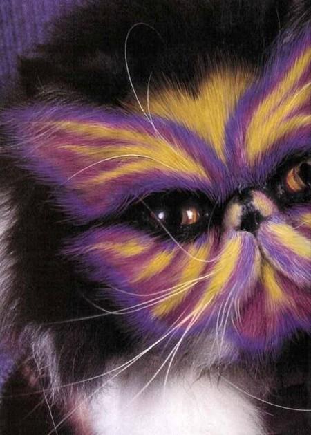 Что такое котопейнт, или «Раскрась кота!» — фото 4