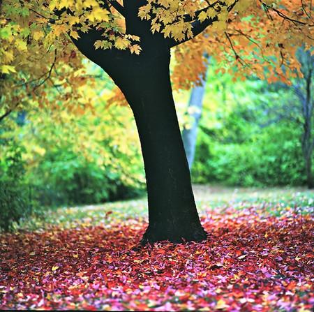 Осень умеет уходить красиво. 55 причин полюбить осень — фото 16
