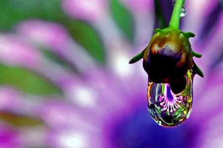 Целый мир внутри капли – фотографии Стива Уолла — фото 44