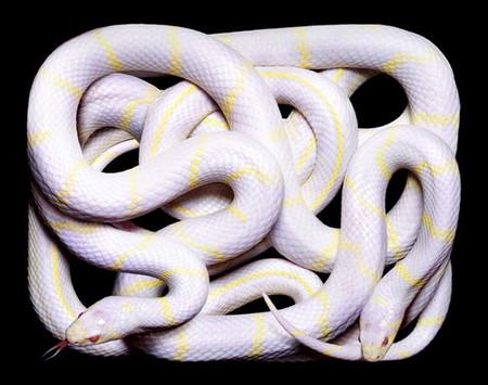 Гвидо Мокафико (Guido Mocafico) - Повелитель змей — фото 17