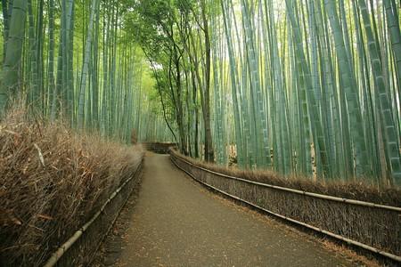 Япония, Киото, бамбуковая роща, красиво … — фото 6