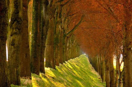 Осень – многоцветная царица… Волшебные фотопейзажи Ларса Ван де Гур — фото 24