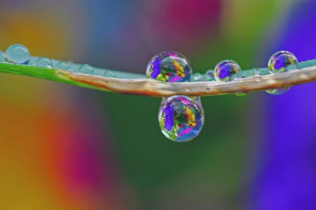 Целый мир внутри капли – фотографии Стива Уолла — фото 39