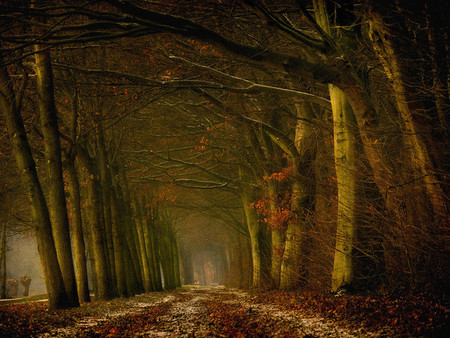 Осень – многоцветная царица… Волшебные фотопейзажи Ларса Ван де Гур — фото 29