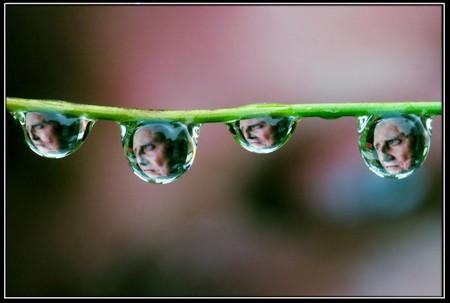 Целый мир внутри капли – фотографии Стива Уолла — фото 10