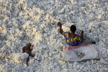 Буркина Фасо, уборка хлопка