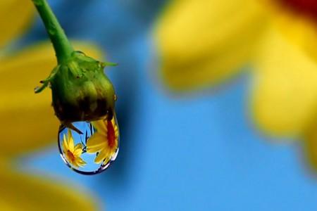 Целый мир внутри капли – фотографии Стива Уолла — фото 36