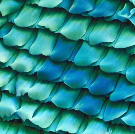 Это — фрагмент крыла бабочки. Похоже на красивую черепицу)