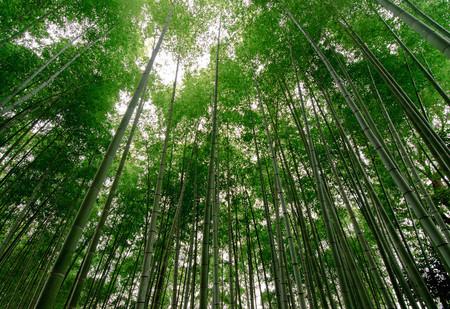 Япония, Киото, бамбуковая роща, красиво … — фото 17