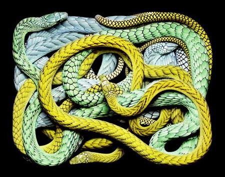 Гвидо Мокафико (Guido Mocafico) - Повелитель змей — фото 20