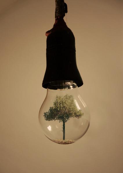 Волшебные лампочки на фотографиях Адриана Лимани — фото 4