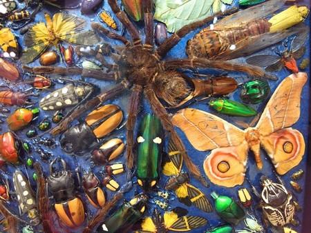 Capaneus – мозаика из маленьких красивых трупиков ) — фото 6