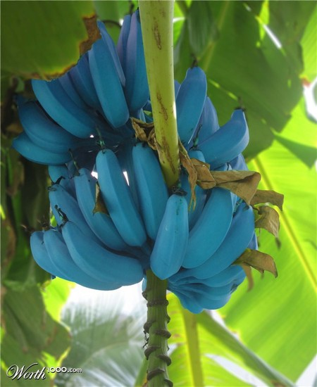 Что, если мир станет более … голубым? Красивый фотошоп — фото 35