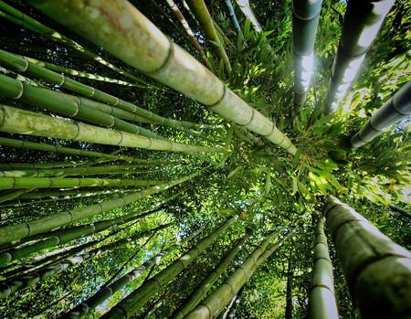 Япония, Киото, бамбуковая роща, красиво … — фото 9