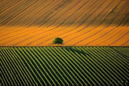 Франция, Коньяк, загородный ландшафт