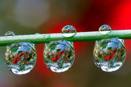 Целый мир внутри капли – фотографии Стива Уолла — фото 12