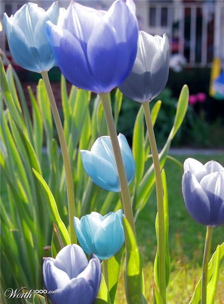 Что, если мир станет более … голубым? Красивый фотошоп — фото 64