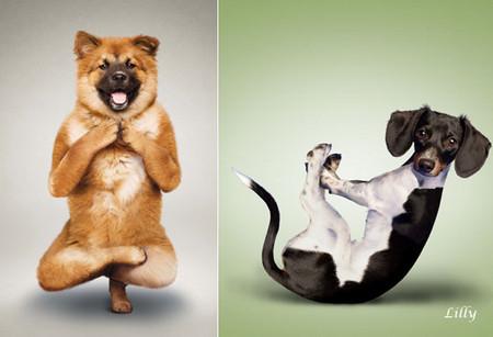 Йога для двуногих от четвероногих — фото 4