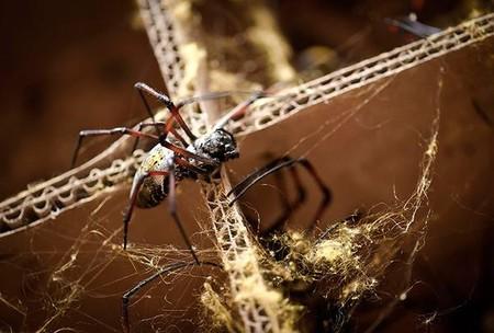 Совместное творчество людей и пауков – платье из паутины — фото 17