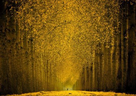 Осень – многоцветная царица… Волшебные фотопейзажи Ларса Ван де Гур — фото 9
