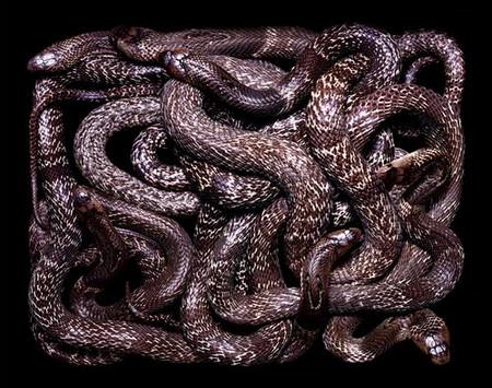 Гвидо Мокафико (Guido Mocafico) - Повелитель змей — фото 5