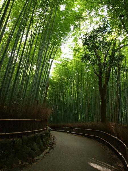 Япония, Киото, бамбуковая роща, красиво … — фото 22
