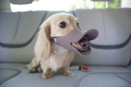 Клювы для собак – японское изобретение Quack Muzzle — фото 4