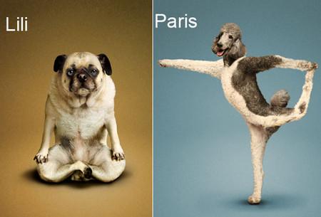Йога для двуногих от четвероногих — фото 7