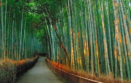 Япония, Киото, бамбуковая роща, красиво … — фото 21