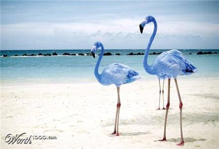 Что, если мир станет более … голубым? Красивый фотошоп — фото 13