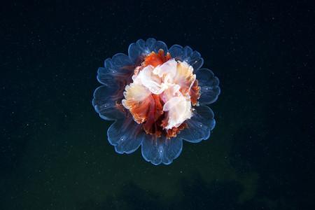 Подводные фотоэксперименты Александра Семенова — фото 5