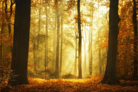 Осень – многоцветная царица… Волшебные фотопейзажи Ларса Ван де Гур — фото 19
