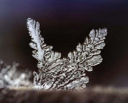 Андрей Осокин – фотограф, которому позируют снежинки — фото 6