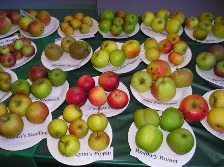 Apple Day в Англии – большой праздник здоровья для любителей яблок — фото 4