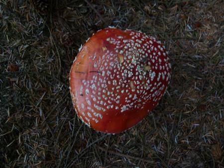И грибочки местами растут, тоже весьма несъедобные