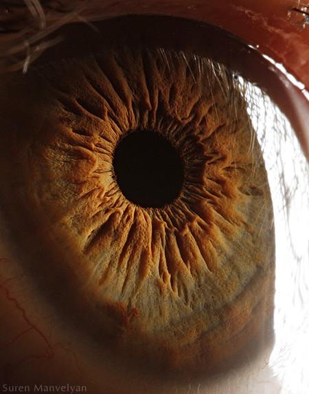 Глаза людей и животных – макроснимки Сурена Манвеляна — фото 15