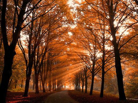 Осень – многоцветная царица… Волшебные фотопейзажи Ларса Ван де Гур — фото 14