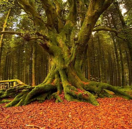 Осень умеет уходить красиво. 55 причин полюбить осень — фото 8
