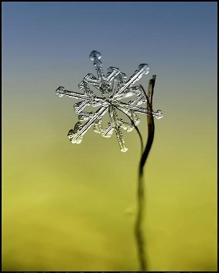 Андрей Осокин – фотограф, которому позируют снежинки — фото 22