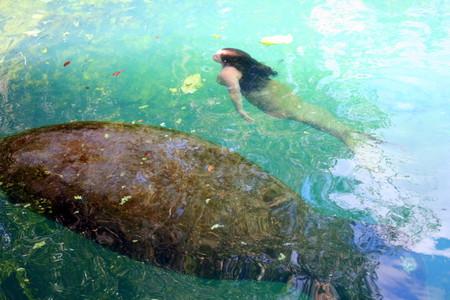 Русалки существуют! Weeki Wachee Springs – город настоящих русалок — фото 15