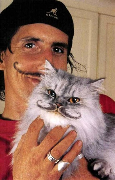 Что такое котопейнт, или «Раскрась кота!» — фото 23