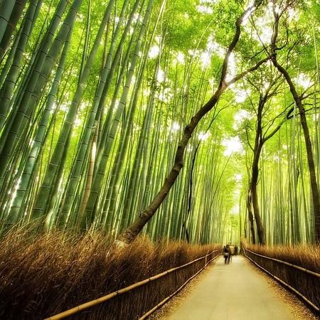 Бамбук — такой же символ Японии, как сакура
